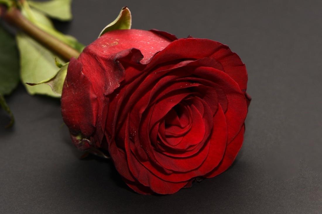 bachelor wine popcorn rose